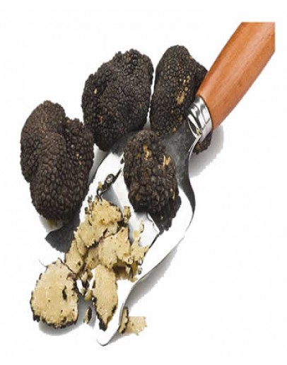 Fresh Black Summer Truffles C-grade Fresh Truffles, Types of truffles, Fresh Tuber Aestivum image