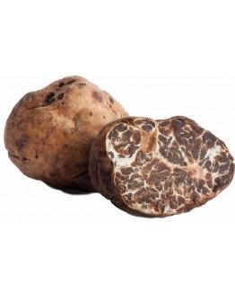 Fresh White Truffles Tuber Albidum pico A-grade