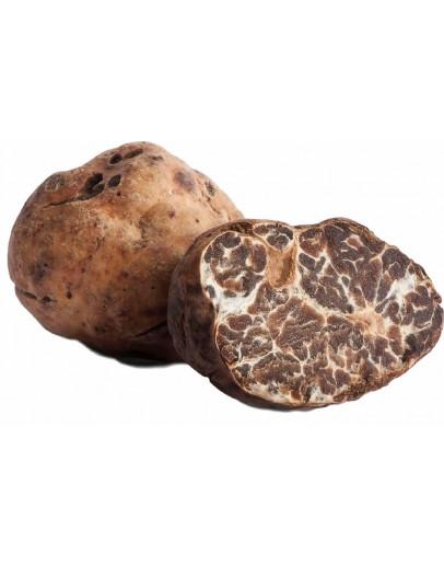 Fresh White Truffles Borchii A-grade Fresh Truffles, Types of truffles, Fresh Tuber Tuber Albidum pico image