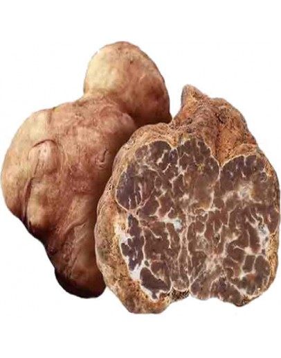 Fresh white truffles Borchii Extra-grade Fresh Truffles, Types of truffles, Fresh Tuber Borchii image