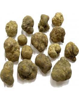 Fresh white truffles Tuber Magnatum pico C-grade