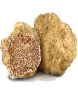 Fresh white truffles Tuber Magnatum pico Extra grade