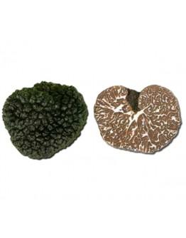 Fresh Bagnoli Truffle Mesentericum B-grade