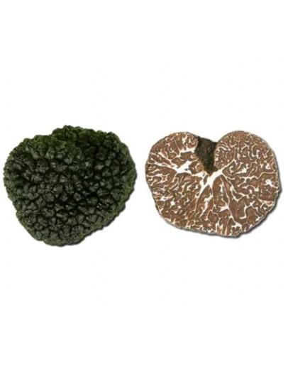 Fresh Bagnoli Truffle Mesentericum B-grade Fresh Truffles, Types of truffles, Fresh Tuber Mesentericum image