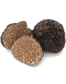 Fresh black Burgundy truffles Uncinatum A-grade