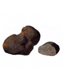 Fresh Smooth Black Truffle Macrosporum A-grade